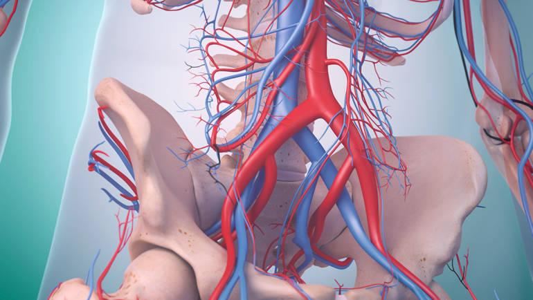 Sinnvoll: Bauchschlagader-Screening für Männer ab 65 Jahren